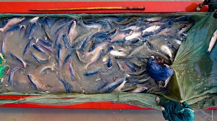 白城月亮湖拉網出魚嘍